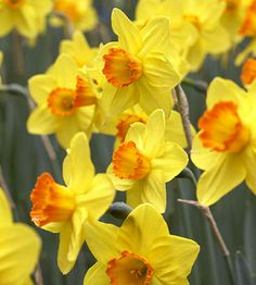 Happy St. David's Day - a National Day in Wales.