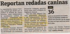 Ciudadanos han reportado ataques a perros callejeros.