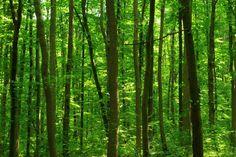 Deep Forest - Tapetit / tapetti - Photowall