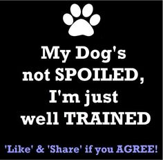 My dog's not spoiled, I'm just well trained