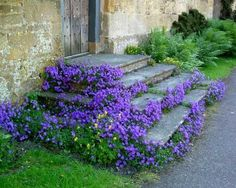 Blue-violet ground cover around stairs Berry Plants, Ivy Plants, Garden Paths, Garden Landscaping, Landscaping Design, Periwinkle Plant, Beautiful Gardens, Beautiful Flowers, Nature
