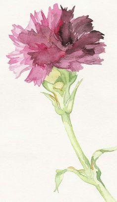 Pink carnation by ~kareninta on deviantART