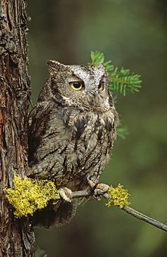 Owl - the natural feathers blend in with the bark of the tree!