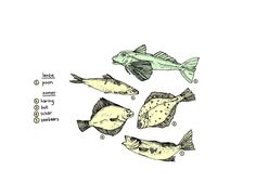 De MUNCHIES-gids om verantwoord vis te kopen