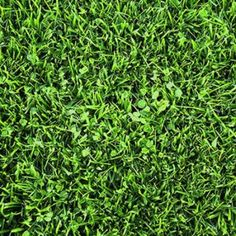 Find more than luck with clovers in your lawn. Lawn Turf, Clovers, Dwarf, Herbs, Herb, Medicinal Plants