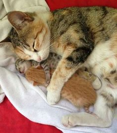 Oh my goodness how precious! Momma kitty and her precious little newborn kittens Cute Cats And Kittens, Kittens Cutest, I Love Cats, Beautiful Cats, Animals Beautiful, Cute Baby Animals, Animals And Pets, Bb Chat, Image Chat