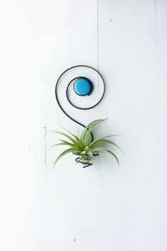 Air Plant Holder Spiral Wall Hanging with Glass Bead von glassetc