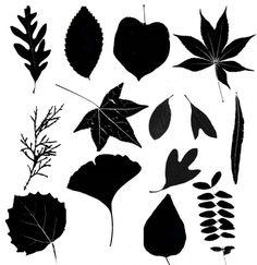 35 leaf silhouettes