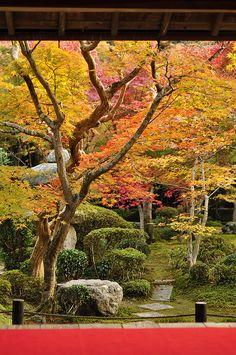 Kyoto, Japan 京都, I'd love a little backyard retreat like this