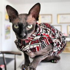23 Endearingly Sinister Hairless Cats