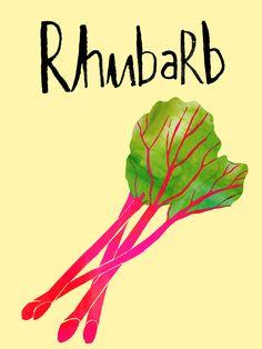 Rhubarb | Claudia Pearson