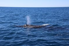 Whale Watching http://foodthatsings.com/whale-watching-hang-on-to-your-wobbly-bits-fun-day-out-of-the-kitchen/