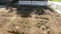 Il nostro orto ... il tempo ci darà ragione!!