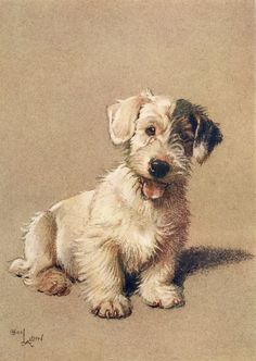 What a lovely little doggy!  This and loads more Cecil Aldin illustrations are available on our public domain Cecil Aldin DVD - just click on the picture.