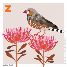 And finally Z for zebra finch, the last of my #australianbirds alphabet. That means it must be day 52 of #the100dayproject for me. Over…
