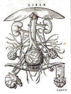 Medical - Midwifery, Germanic handbook 1500s - reproductive system