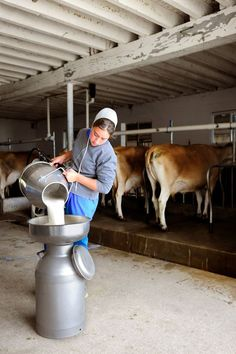 Milking time. Walnut Creek, Ohio