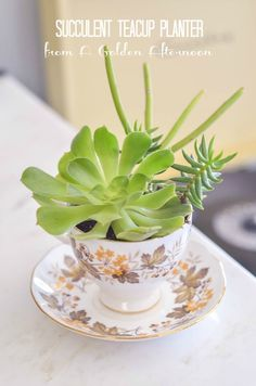 Succulent Teacup Planter from A Golden Afternoon