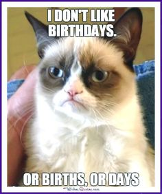 Birthday Meme with a Cat: