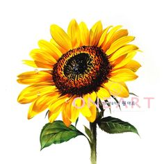 Exquisite Learn To Draw A Realistic Rose Ideas. Creative Learn To Draw A Realistic Rose Ideas. Watercolor Sunflower, Watercolor Flowers, Art Drawings Sketches Simple, Planting Sunflowers, Sunflower Wallpaper, One Stroke Painting, Plant Drawing, Plant Art, Color Pencil Art