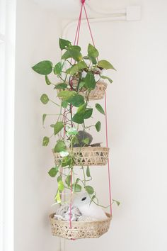 DIY: hanging baskets