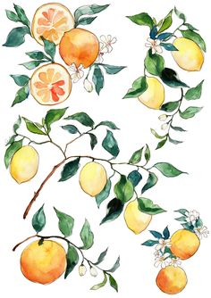 citrus blossom.jpg