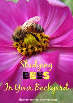 Studying bees in your backyard - backyard bees - The Homeschool Scientist - Drone Bee, Beekeeping For Beginners, Bee Farm, Backyard Beekeeping, Citizen Science, Fruit Plants, Nature Study, Bees Knees, Walking In Nature