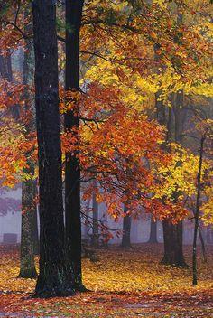 Autumn in a Foggy Park
