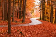Red forest by myredcar on 500px