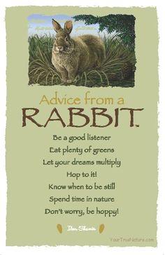 ☆ Advice From a Rabbit ~:By Ilan Shamir ☆