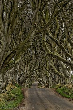 Visit Ireland in general but this place for sure! The Dark Hedges - Northern Ireland