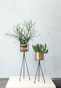 plant stands / holly's house