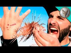 (26) STUNG by a LIONFISH! - YouTube