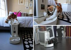 Feedster Automatic Cat Feeder
