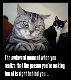 That akward moment funny memes animals cat cats meme lol cute. humor funny animals