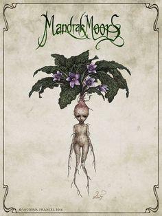 MandrakMoors_Mandrake 1.jpg 976×1,299 pixels