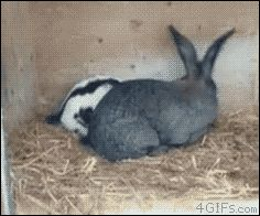 18금)호주는 토끼를 엄청나게 사냥하는 모양이군요.1