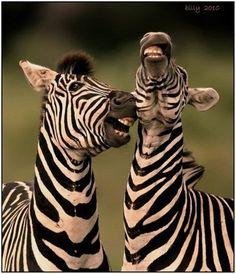 loving zebras, always smile