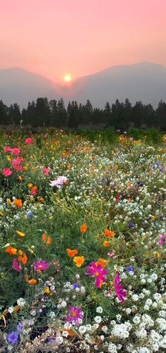 Flowers Photography Wallpaper Summer Fields Ideas For 2019 Nature Aesthetic, Flower Aesthetic, Photo Wall Collage, Picture Wall, Aesthetic Backgrounds, Aesthetic Wallpapers, Beautiful Flowers, Beautiful Places, Images Esthétiques