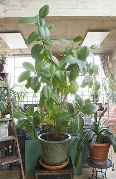 Tropical plants Tropical Plants
