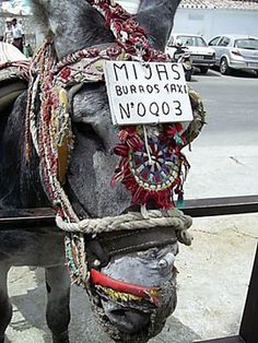 Petition · Ayuntamiento de Mijas: Stop the beating of our Mijas Pueblo Donkeys ·… Racing Extinction, Make It Stop, Animal Graphic, Post Animal, All About Horses, Stop Animal Cruelty, Animal Protection, The Donkey, Losing A Pet