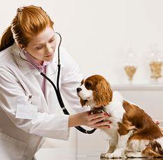 Can not wait to start my school toward Veterinary Technician Future Career, Future Goals, Dream Job, My Dream, Pet Health, Health Care, My Adventure Book, People Who Help Us, Vet Clinics