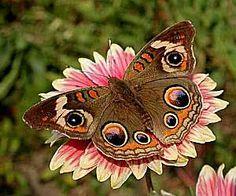 .Beautiful Butterfly ♥