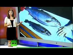 GMO Salmon What Next? Genetically Modified Food - YouTube