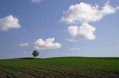 写真,素材,無料,フリー,フォト,クリエイティブ・コモンズ,風景,壁紙,畑を見守って、、、, 木, 雲, 青空, 畑
