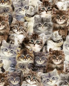Cute Cats And Kittens, Cool Cats, Kittens Cutest, Animals And Pets, Baby Animals, Cute Animals, Pretty Cats, Beautiful Cats, Cat Fabric