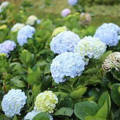 Free Image on Pixabay - Flower, Dalat, Vietnam, Natural