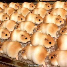 Hamster Bread is a thing. They're so cute I wanna bite their heads off. Where can I find these? Crosspost with /r/japan