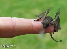 Baby Dragon -- Isn't he cute!