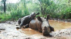 The Rhino Orphanage – Nthlo ya Lerato